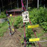 電気柵の柵線の設置方法を解説