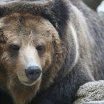 クマ対策に使用できる電気柵について解説